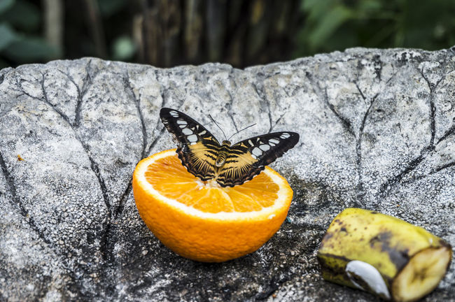 Animal Antenna Animal Markings Banana Beauty In Nature Black Color Butterfly Butterfly Arc Close-up Day Focus On Foreground Fragility Fruit Ground Insect Natural Pattern Nature No People Orange Outdoors Selective Focus Yellow