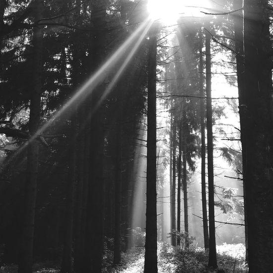 Shades Of Grey Taking Photos Blackandwhite Photography Blackandwhite Black And White EyeEm Best Shots Sun Morning Light EyeEm Nature Lover Sauerland