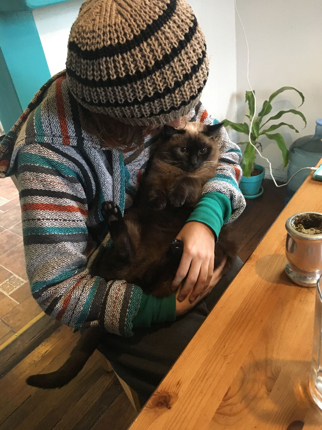 One Animal Pets Indoors  Domestic Cat Domestic Animals Mammal One Person Domestic Life Day Home Interior People Table Siamese Cat Cat Cats Fat Cat Hug Squeeze Kiss Cradle  Cuddles Cuddling Hippie Animal Themes Cozy