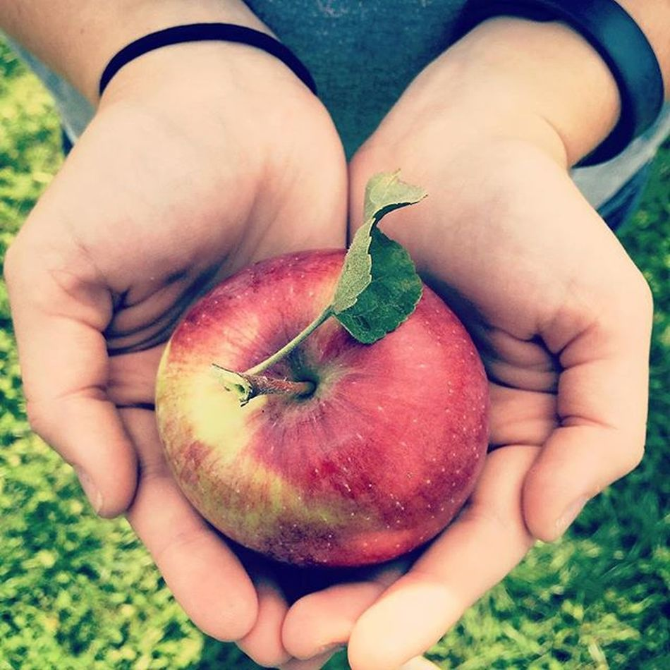 Apple picking with the gorgeous @kar_bear12 Applepicking Vscocam Nature Apples Fall 2015  Leadingrelocal September Changeoftheseasons Giantimagery Color