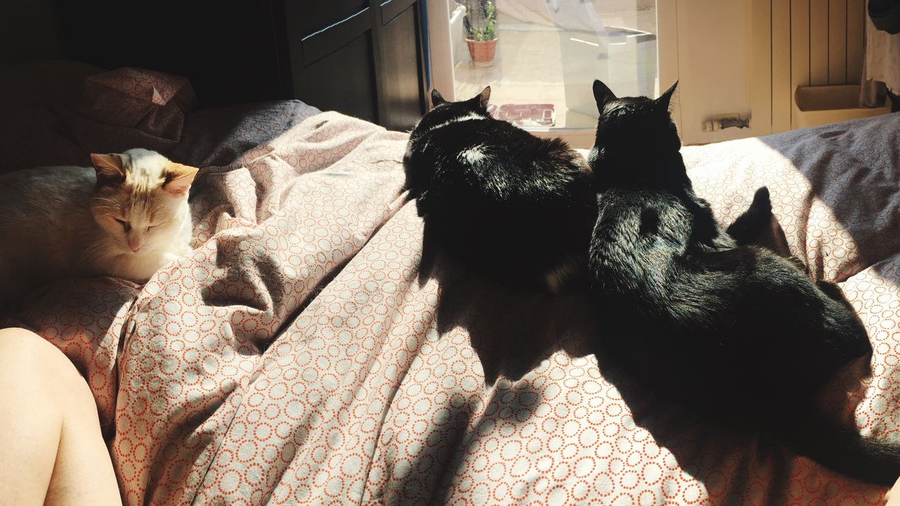 Saturday morning Domestic Animals My Cats Are Cooler Than Your Kids Cats Sunlight Saturday Morning