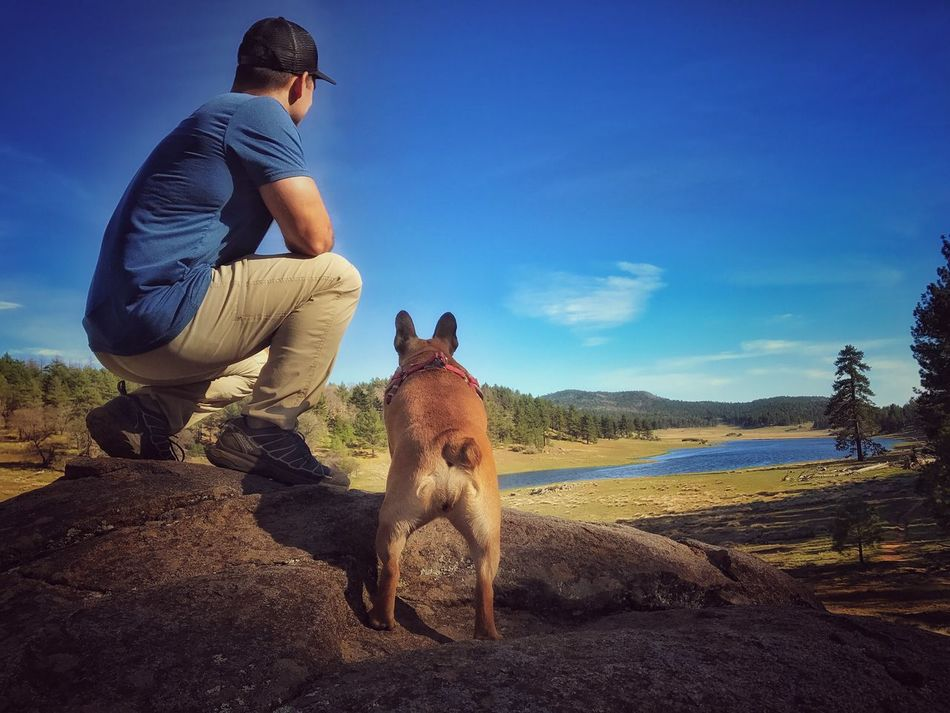 Hiking Adventure Puppy Frenchbulldog Frenchie Climb Family Optoutside Wanderlust Love Pct NaturePets Leisure Activity Outdoors Beauty In Nature Squirrel Field