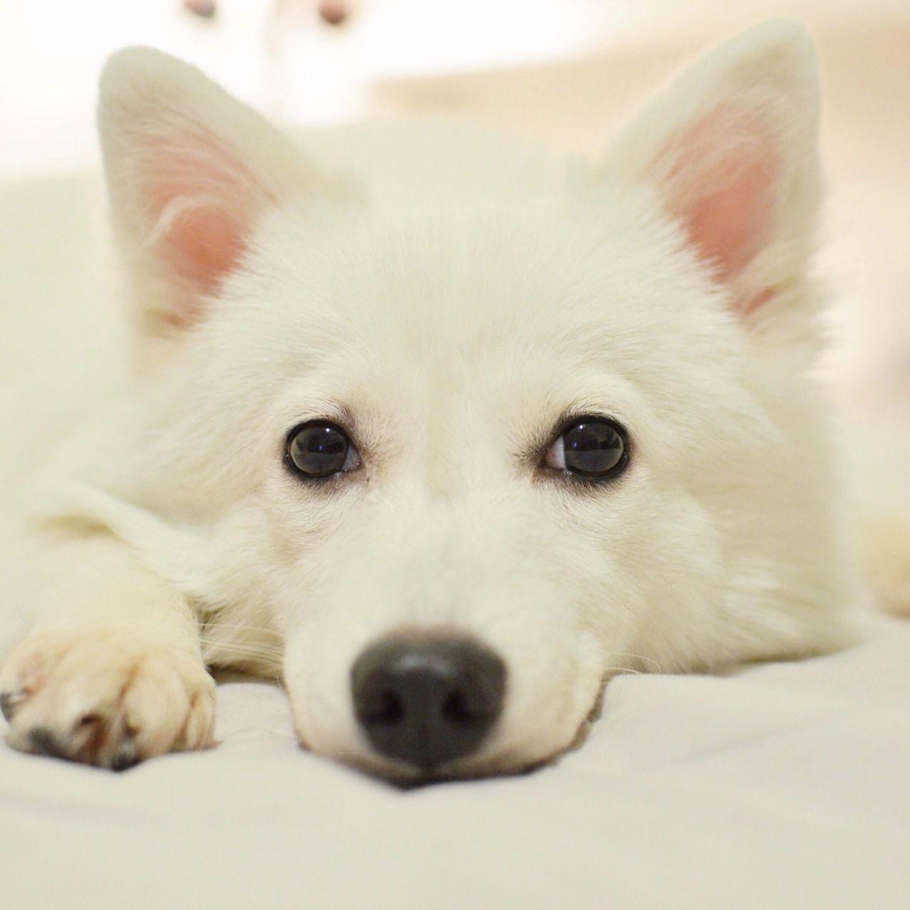 from my instagram: wes_c Puppy Cute Pets Pets Petstagram