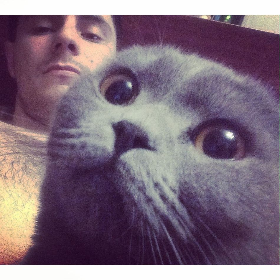 why are you still awake? My Cats Cat Cats Catsofinstagram Followme Selfie Selfportrait Rostov Russia Relaxing
