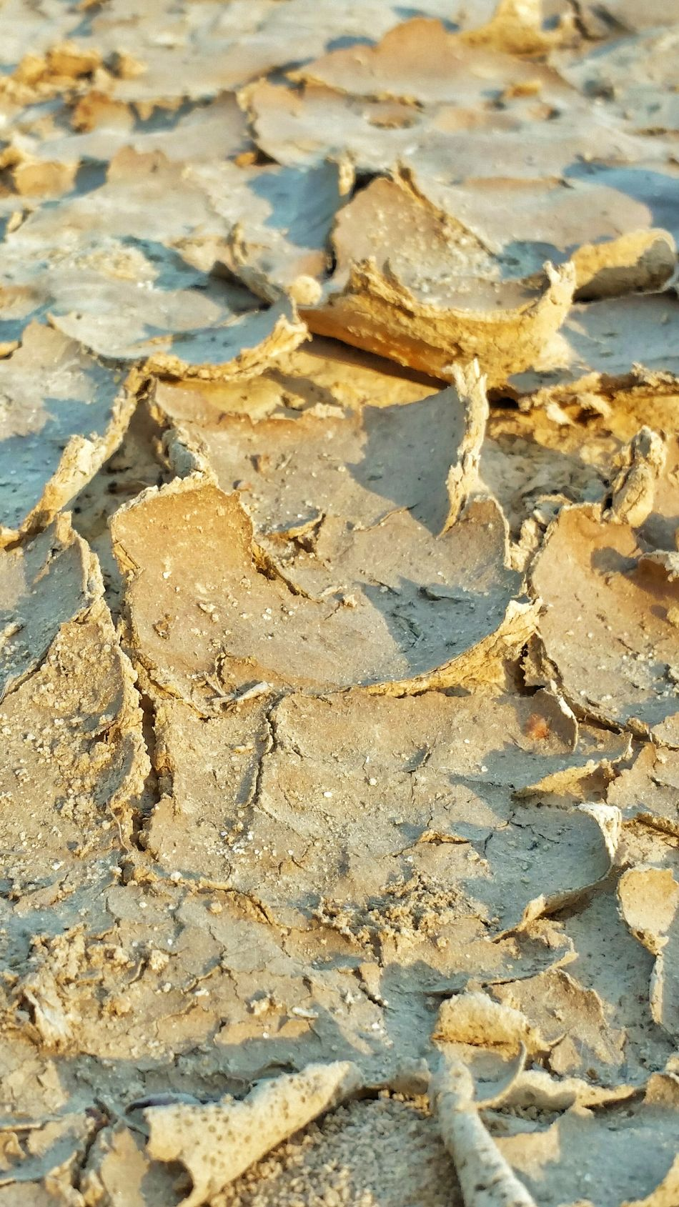 Full Frame Outdoors Nature Backgrounds Close-up Dirt Mud Cracks Cracks In The Earth Curled Up Dried Mud Shapes And Forms Bent Pattern Patterns In Nature Earth Dried Dried Up Shapes And Design Earth Tones Lights And Shadows Definition Lines And Shapes Textures Textured Surface