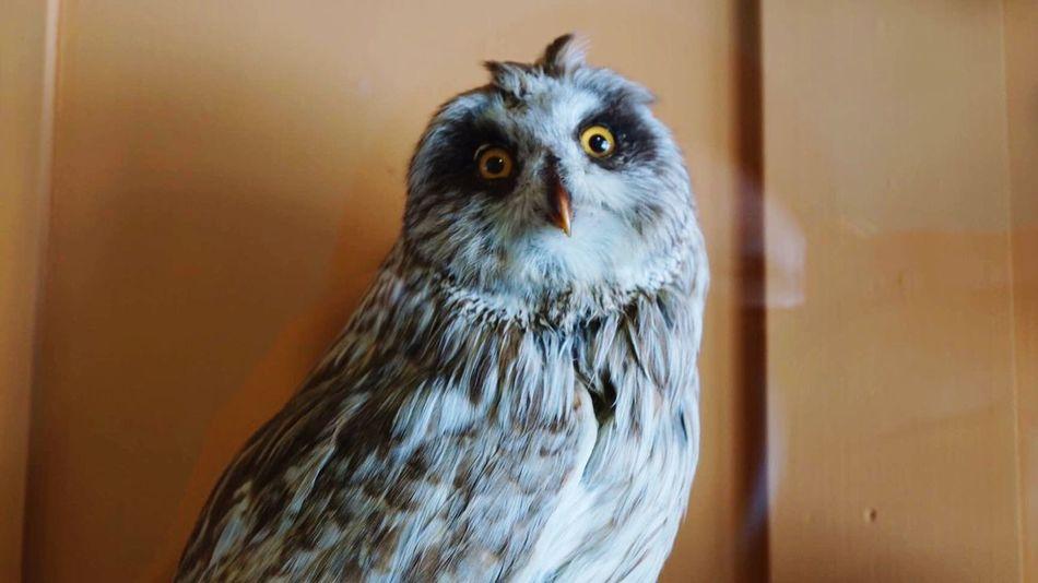İmsofab Owllife