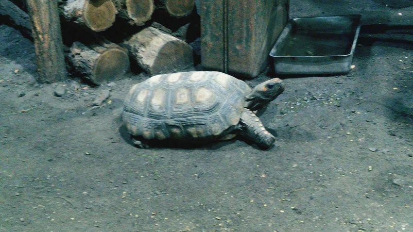 Just, because I like turtles. :D Iliketurtles Turtle Animals Zoo