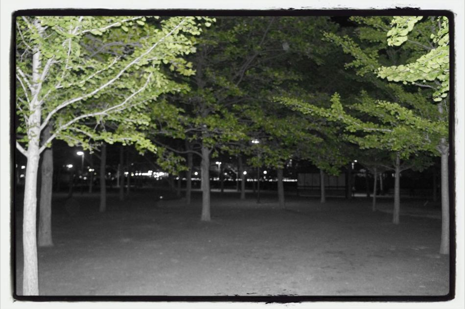 Hanging Out Black&white&color Parks