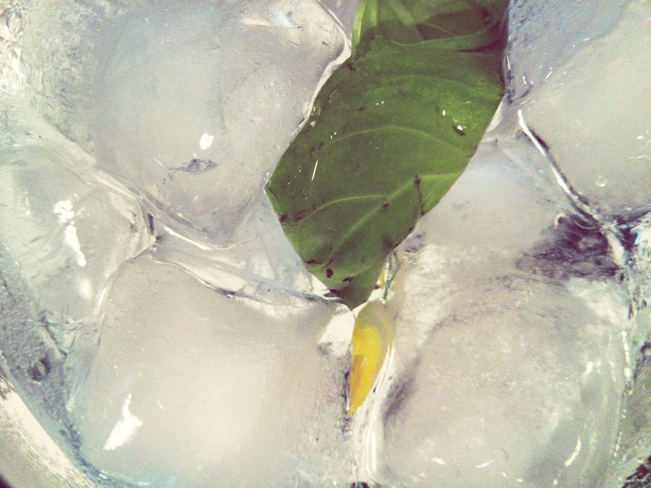 Drinking Gin Tonic Gin Tonic On Ice Tonic Water Gin & Tonic Gin And Tonic Tonica Tonicwater Ice Basilico Basil Lemon Gintonic Gin Tonic Drinkgin Drinkporn Having A Drink Drink Drinks