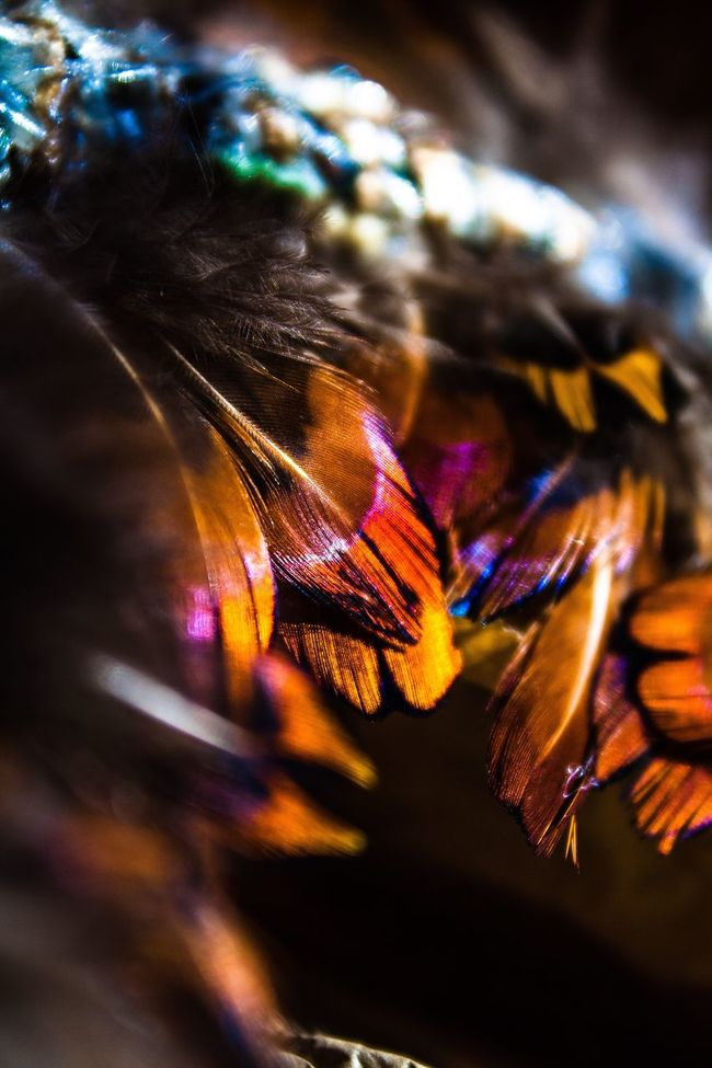 Feathers Dream Catcher Close Up Orange Color Catch Light Window Light Earth Colours Earth Colors Burnt Orange Sharp Focus Texture Shiny Hand Crafted Hand Craft Crafting Homemade Art