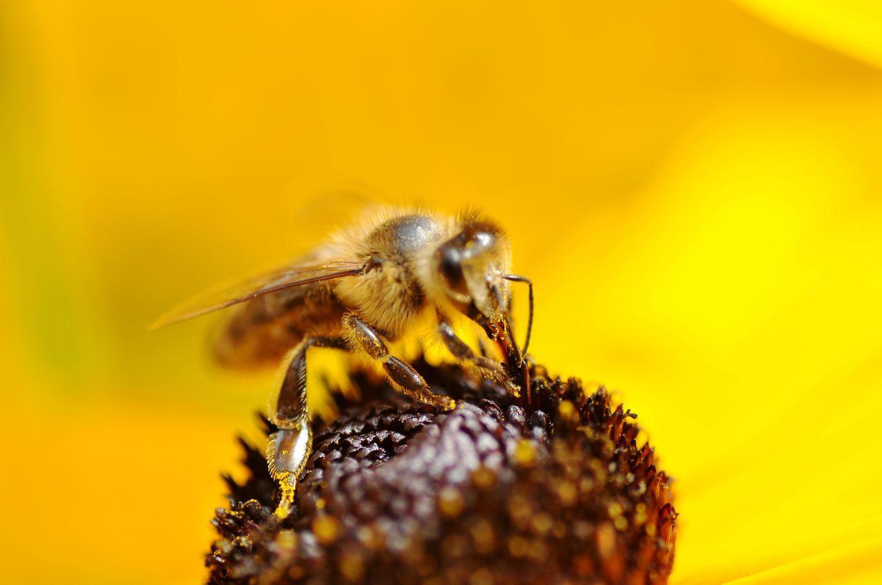 Beautiful stock photos of bee, Animal Themes, Animal Wildlife, Animals In The Wild, Bee