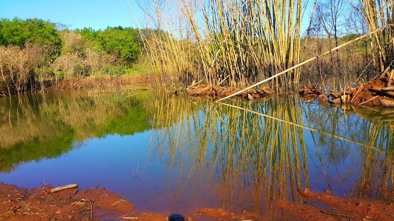 Selvagem Lifestyles Day Animais Agua Cachoeiras