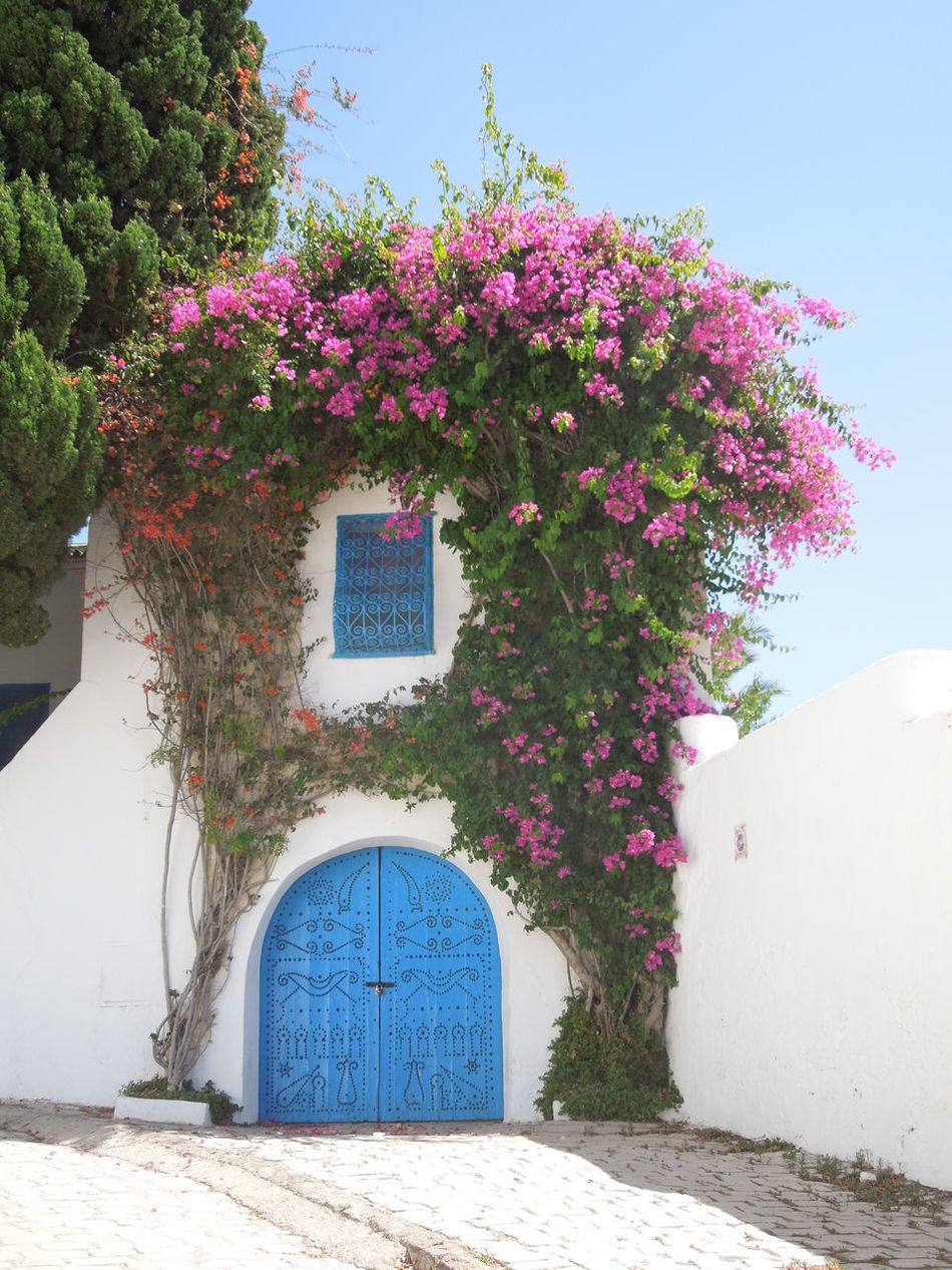 wonderfull door... No People Nature Outdoors Plant Flower Architecture Tree Sky Keine Menschen Blauer Himmel Blau Planzen Blumenpracht🌺🍃 Blumen Tunisia Sidi Bou Said Tunis Blue Sky Blue Beauty In Nature Nature Plant Tor Tür Eingang