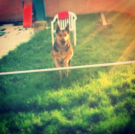 In my dog ❤️❤️