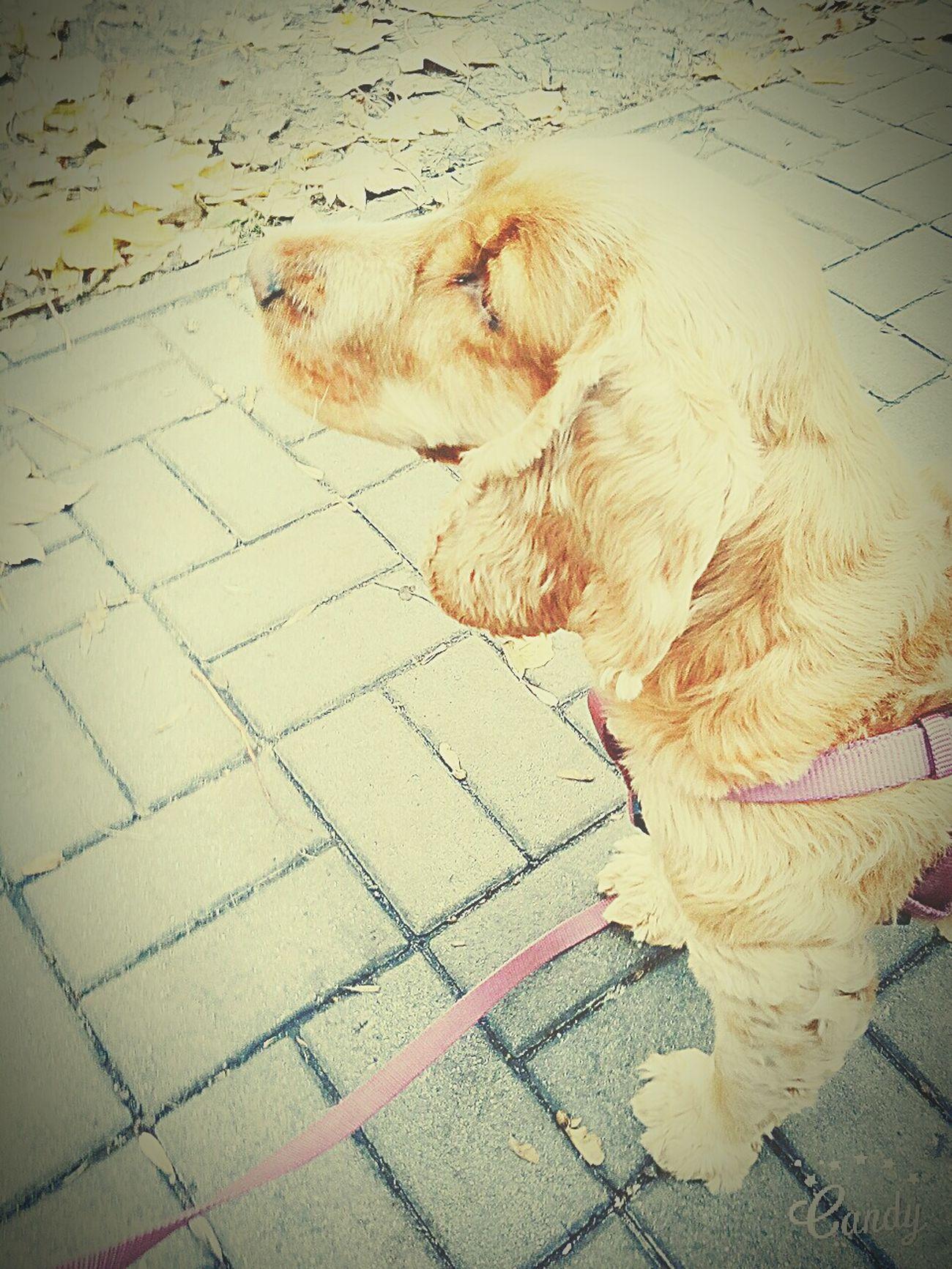 Muji Ukochany Piesek<3 Tosia Love ♥ You Focia Kom Like ? ❤ Awwwww♥♥♥ Wow!!😋 Nice Butiful Pozdro : * śliczności