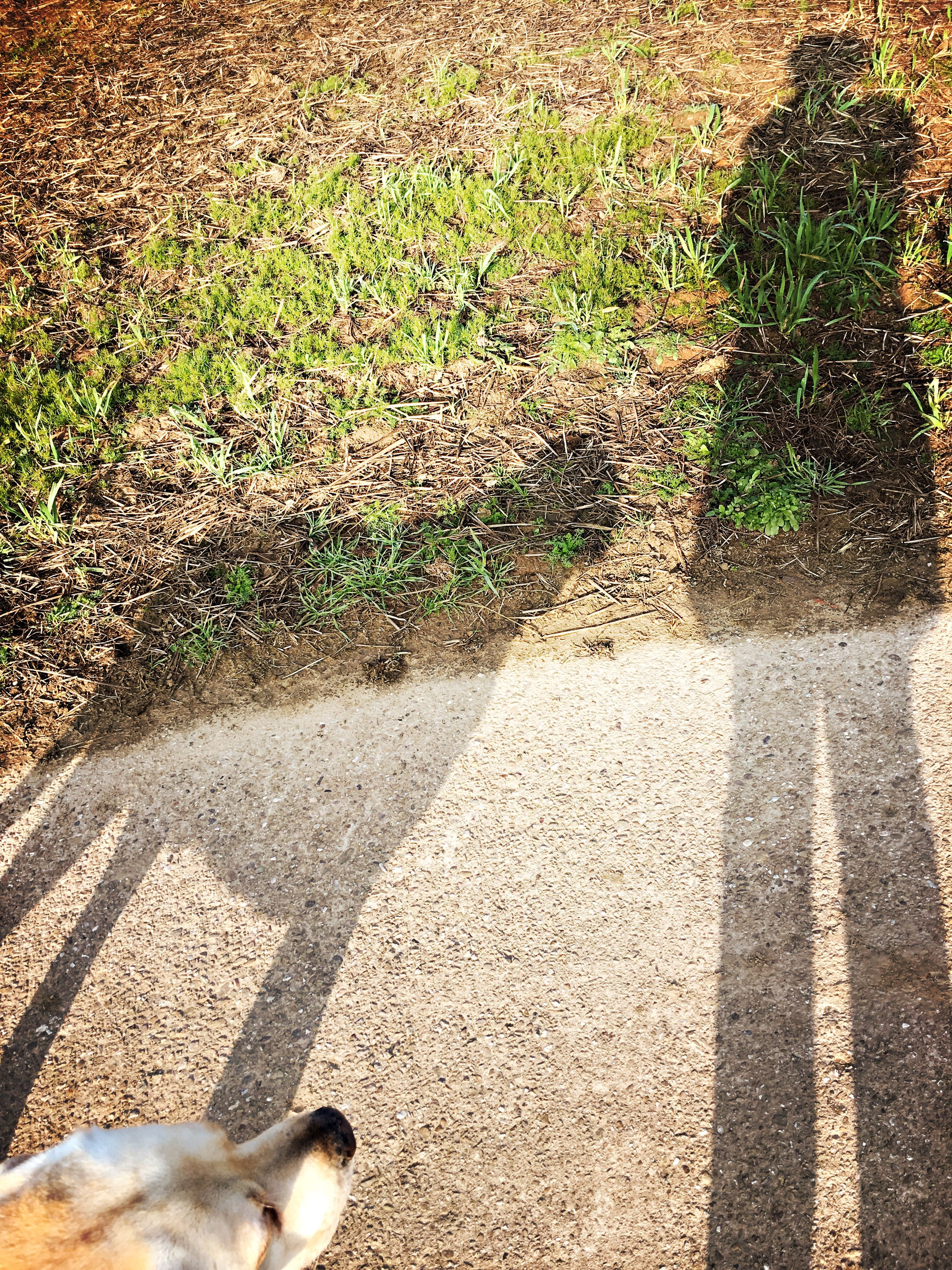 high angle view, domestic animals, shadow, pets, sunlight, animal themes, dog, mammal, one animal, street, grass, footpath, outdoors, day, low section, no people, field, unrecognizable person, road, nature