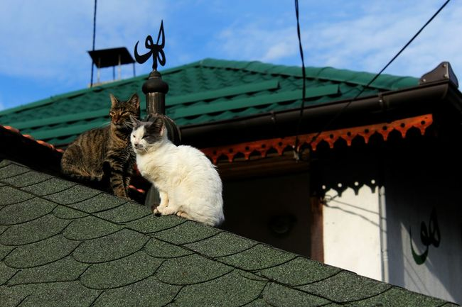 Outdoors Animal Themes Day Cat Cats Of EyeEm Rooftop Chilling Shady Animals Sunbathing Green