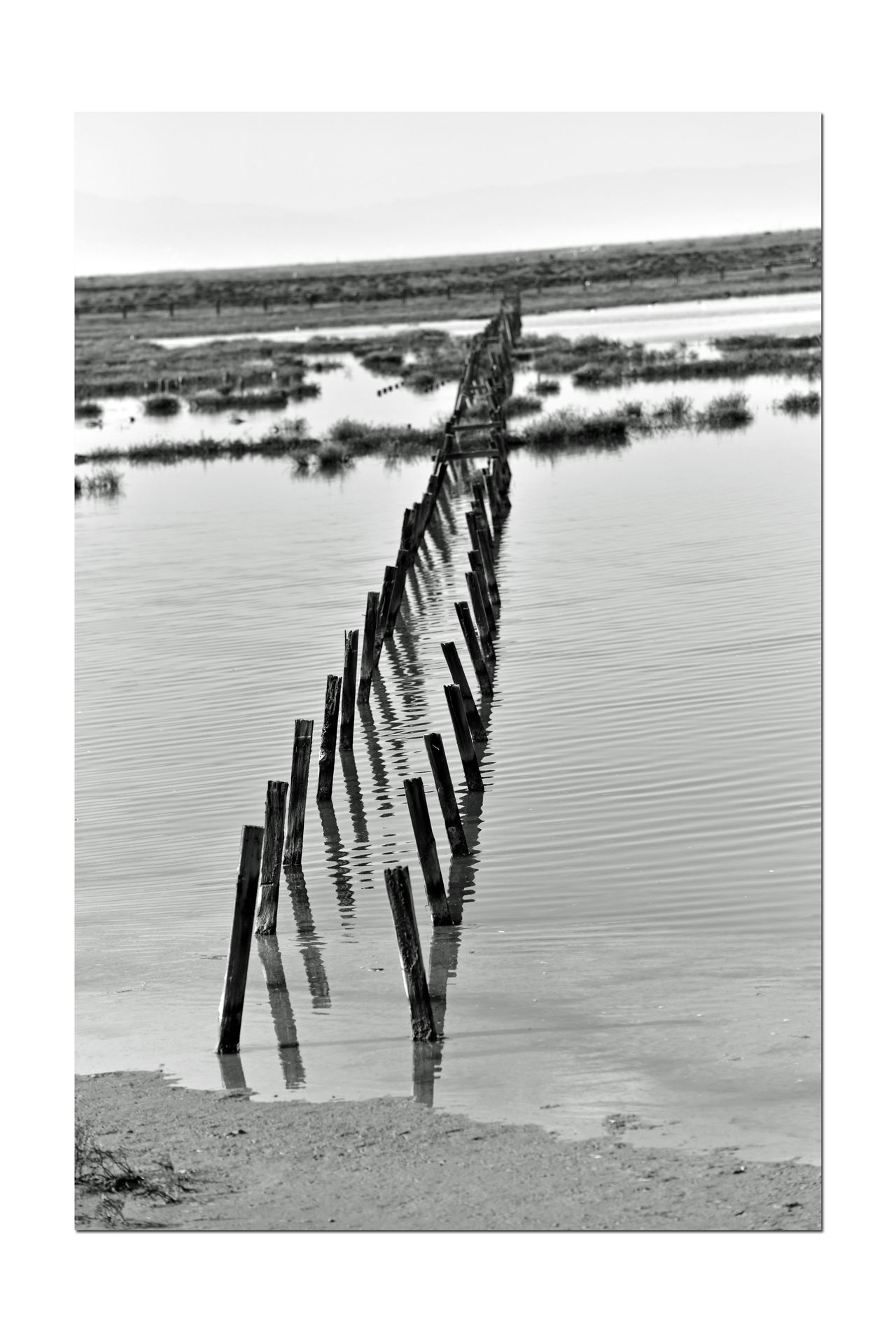 Stakes @ Edens Landing 2 Ecological Reserve Water Level Indicator Restored Marsh Tidal Marsh Bay Ecosystem Saltwater Wetlands Save The Bay Est 2003 South Bay Salt Ponds Restoration Project Birdlife Wildlife Habitat Bring Back Endangered Species California Dept Of Fish & Game Nature Nature_collection Nature Photography Black And White Black And White Photography Black And White Collection  Reflections Landscapes With WhiteWall Chromosome Likeness