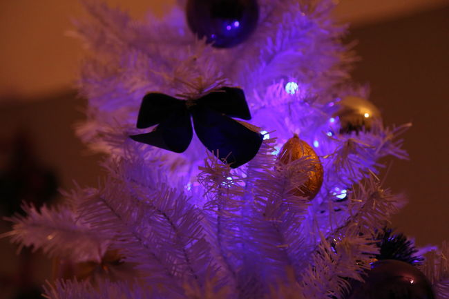 Détail Beauty In Nature Bloom Blossom Christmas Lights Christmas Tree Close-up Color Enhanced Flower Head Focus On Foreground Fragility Freshness Full Frame Growth Illuminated In Bloom Light Multi Colored Nature Night No People Petal Purple Softness The Culture Of The Holidays Vibrant Color