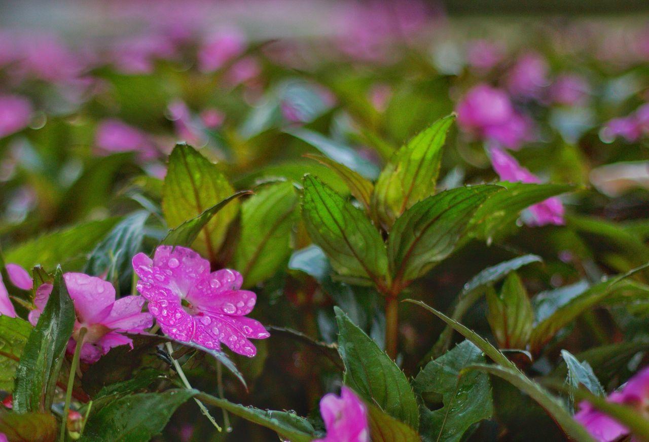 Parque de El Capricho en Madrid España Nature Growth Freshness Flower Beauty In Nature Close-up Fragility Plant No People Petal Outdoors Flower Head Españoles Y Sus Fotos