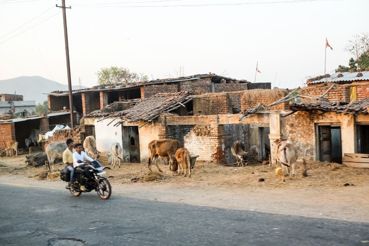 built structure, building exterior, architecture, outdoors, transportation, domestic animals, day, livestock, one person, road, men, real people, motorcycle, mammal, one man only, sky, young adult, people, adult