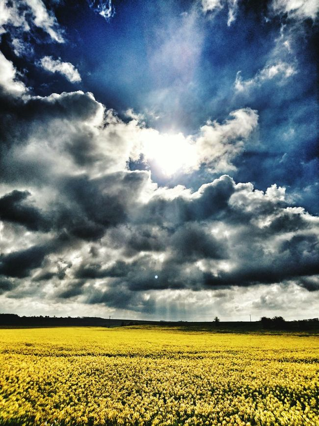 Couleur colza 🌿🌾🌾🌿 Flowers Yellow Photography Is My Escape From Reality! Eyeem France Nature_collection Champ De Colza Clouds And Sky Clouds Sky Sun Landscape Countryside