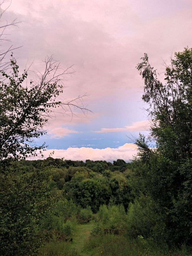 Tree Tranquil Scene Scenics Sky Growth Tranquility Cloud - Sky Beauty In Nature Nature Branch Non-urban Scene Cloud Outdoors Day Green Color Remote No People Green WoodLand Cloudy