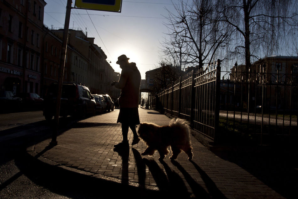 Dog Street Silhouette Streetphotography Saint Petersburg Observecollective