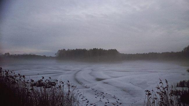 zima Sosnie Work Zalew Poranek Fotografia