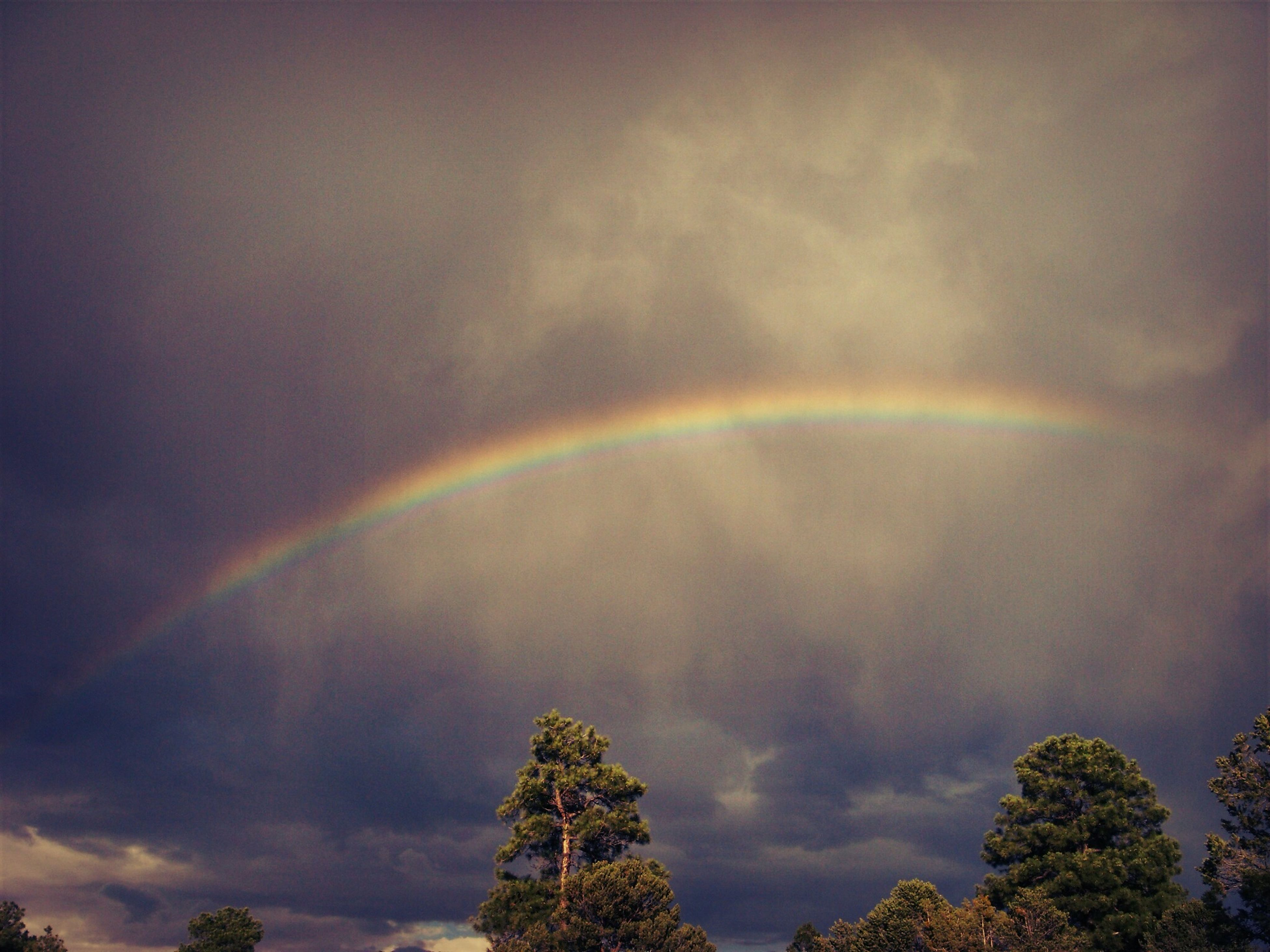 sky, beauty in nature, tree, scenics, cloud - sky, tranquility, low angle view, tranquil scene, nature, cloudy, rainbow, idyllic, weather, overcast, dramatic sky, cloud, cloudscape, outdoors, growth, multi colored
