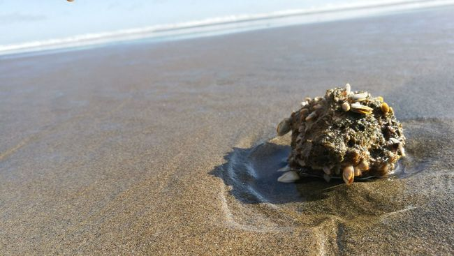 Shells Beach Piha Beach Trip Photography NZ SuparGusCollection
