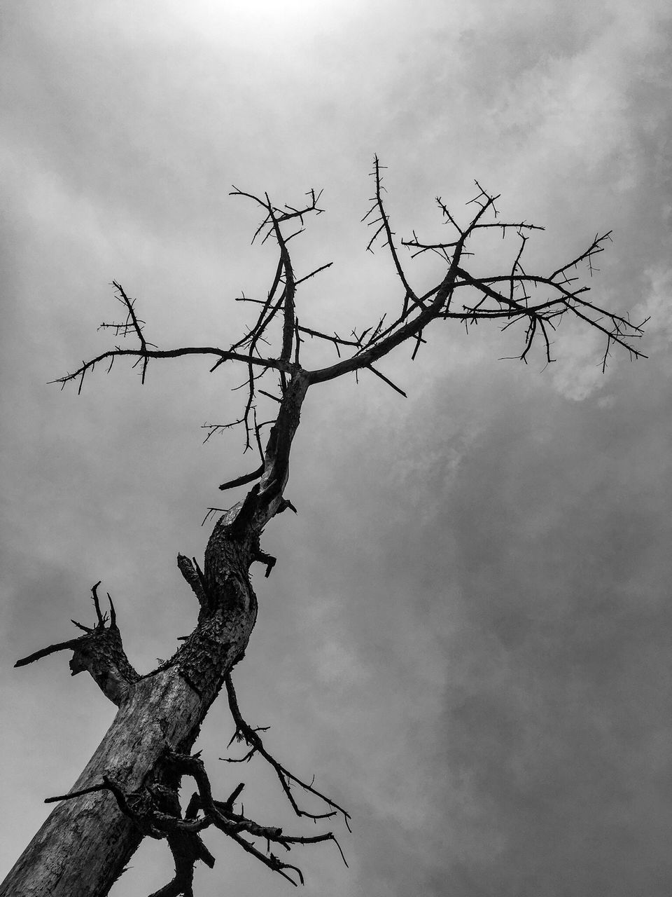 low angle view, branch, tree, outdoors, day, bare tree, sky, no people, nature, beauty in nature, tree trunk, dead tree, animal themes