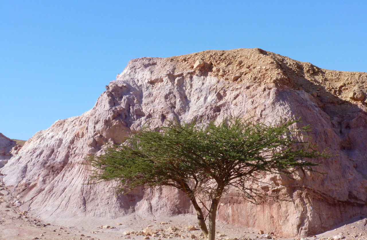 A Pink Rock hide behind an Acacia Tree @ The Red Canyon Trail @ Eilat Mountains Geological Paradise Acacia Tree Beauty In Nature Clear Sky Cropped Desert Beauty Desert Landscape Desert Life Deserts Around The World Eilat Eilat Mountains Eilat Red Canyon Eye4photography  EyeEm EyeEm Best Shots EyeEm Best Shots - Nature EyeEm Gallery EyeEm Nature Lover Geological Formation Hikingadventures Mountains And Sky Nature Photography Nature_collection Rock Formation Travel Destinations TreePorn