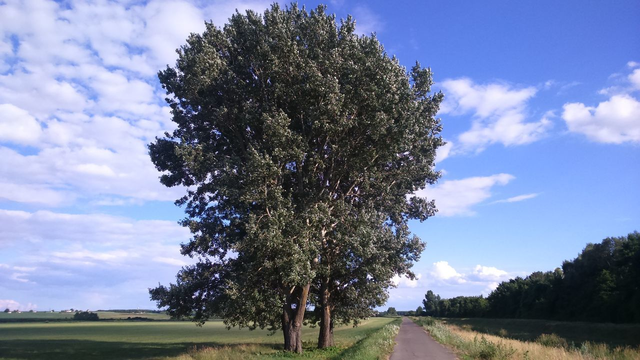 tree selection Clouds And Sky Nature Nature_perfection Naturelovers Poplar Tree Poplargrove Poplars Tree And Sky Tree Selection Trees