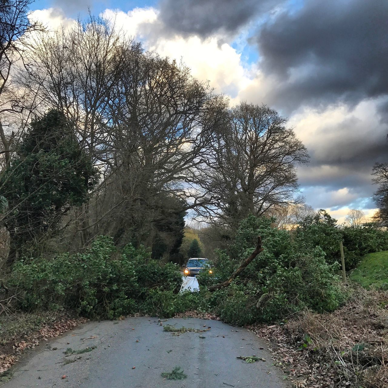 Storm Doris caused fallen trees in Surrey. Tree Sky Transportation Outdoors Day Nature Growth Cloud - Sky Scenics Bare Tree One Person Beauty In Nature Storm Doris Storm Doris Stormy Weather Surrey Fallen Tree Fallen Trees England Uk Europe Gales