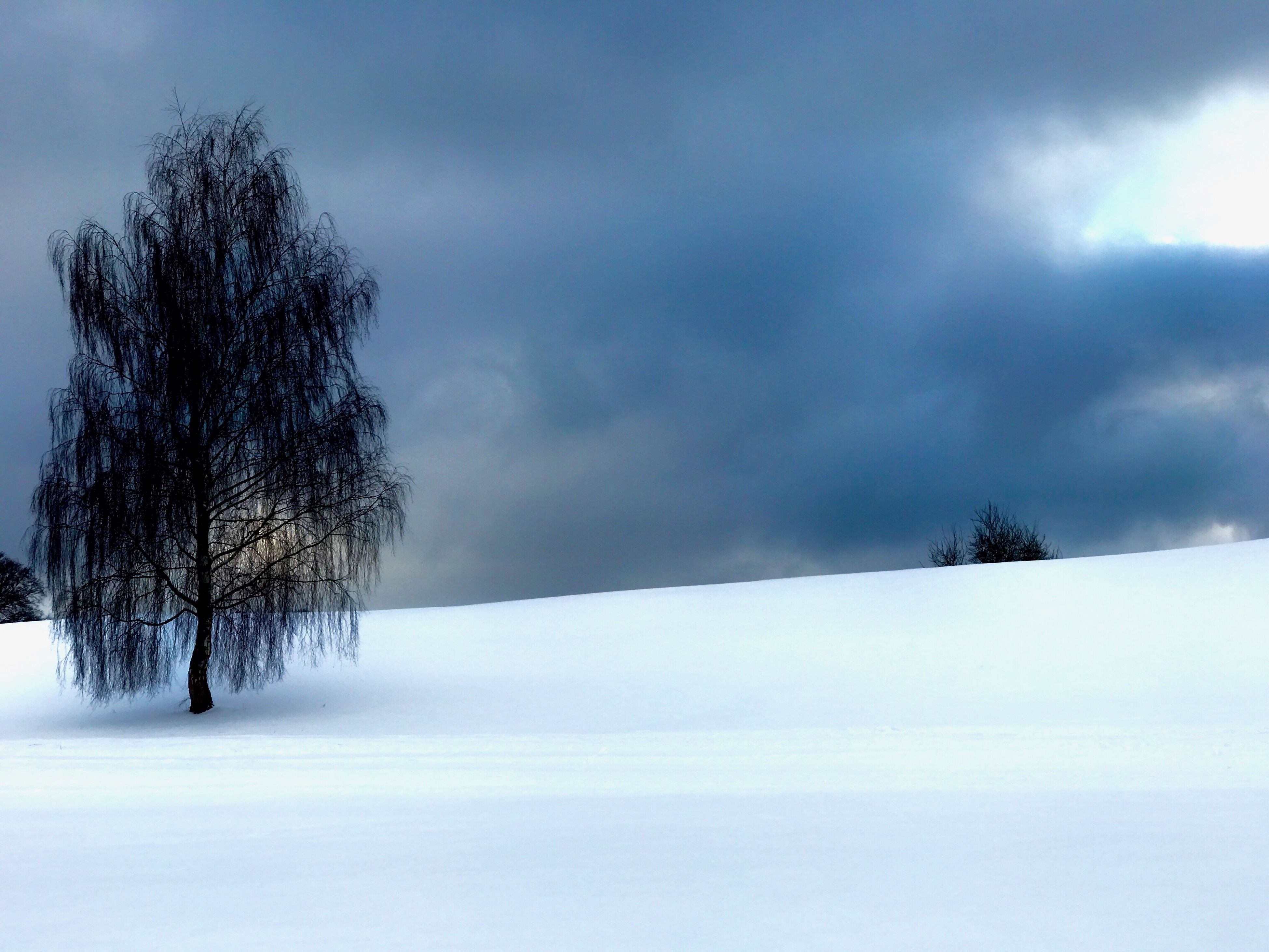 Winter Sky Cold Temperature Cloud - Sky Outdoors No People Nature Field Trees Clouds