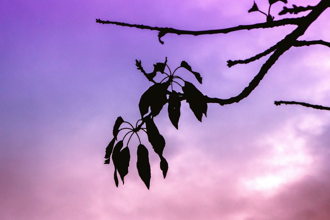 https://youtu.be/v1pZgrk_WCw Nature Beauty In Nature Sky No People Tree Fragility Outdoors Pink EyeEm Best Shots EyeEmBestPics EyeEm Canon Getting Inspired Eye4photography  EyeEm Gallery Simplicity Nature Leaves Minimal Minimalism Horizon