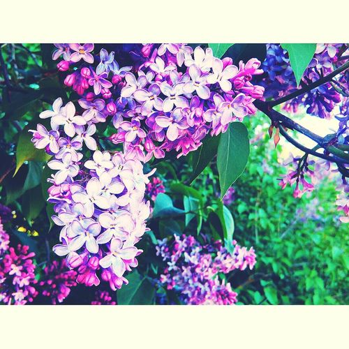 🌷 Flowers 🌹 Nature First Eyeem Photo