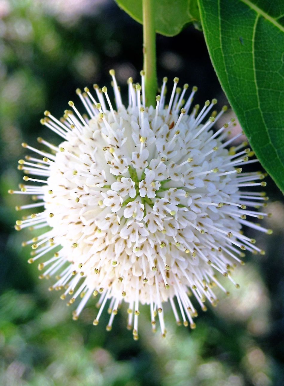 Unidentified flower Beauty In Nature Close-up Flower Flower Head Fragility Freshness Nature Outdoors Plant White Color