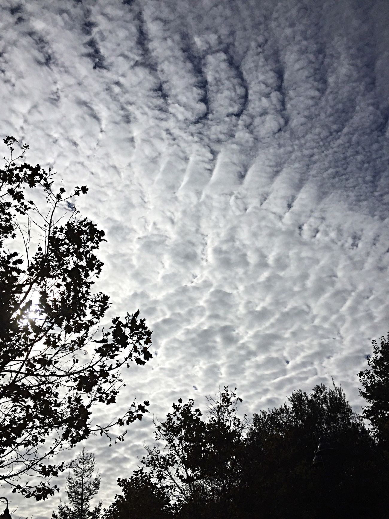 Quilted Sky