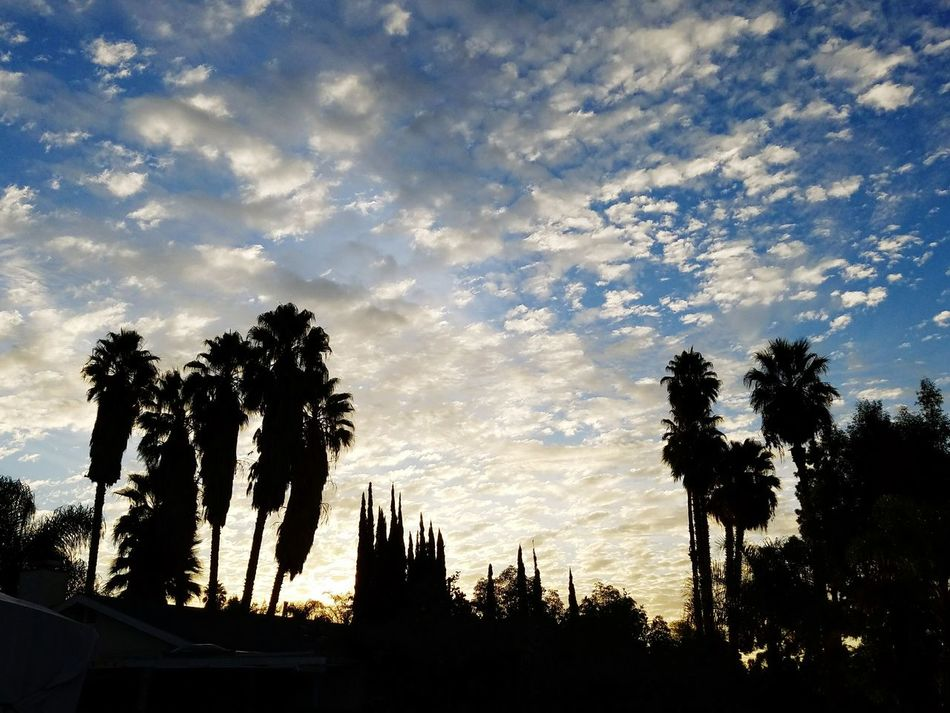 Saturday Morning Palm Tree Outdoors Cloud - Sky Tree Beauty In Nature Silhouette California Love Cloud_collection  Tranquility Southern California EyeEm Best Shots Eye4photography  Morningview California Mornings Sky And Clouds Riverside, California Sky_collection