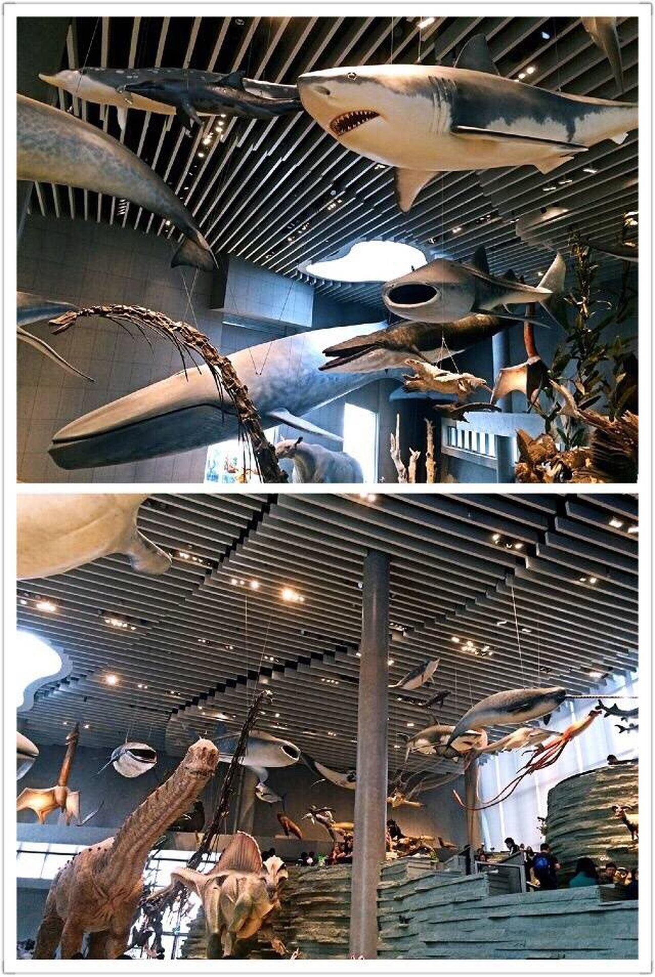 Animals Hanging Out Airplane Indoors  No People Day Creature Amazing Architecture Indoors  NaturalScienceMuseum Museum Holiday Scupture