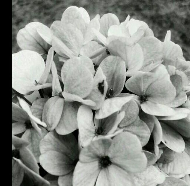Love ♥ Flower Collection Beautiful Flowers Perfect <3