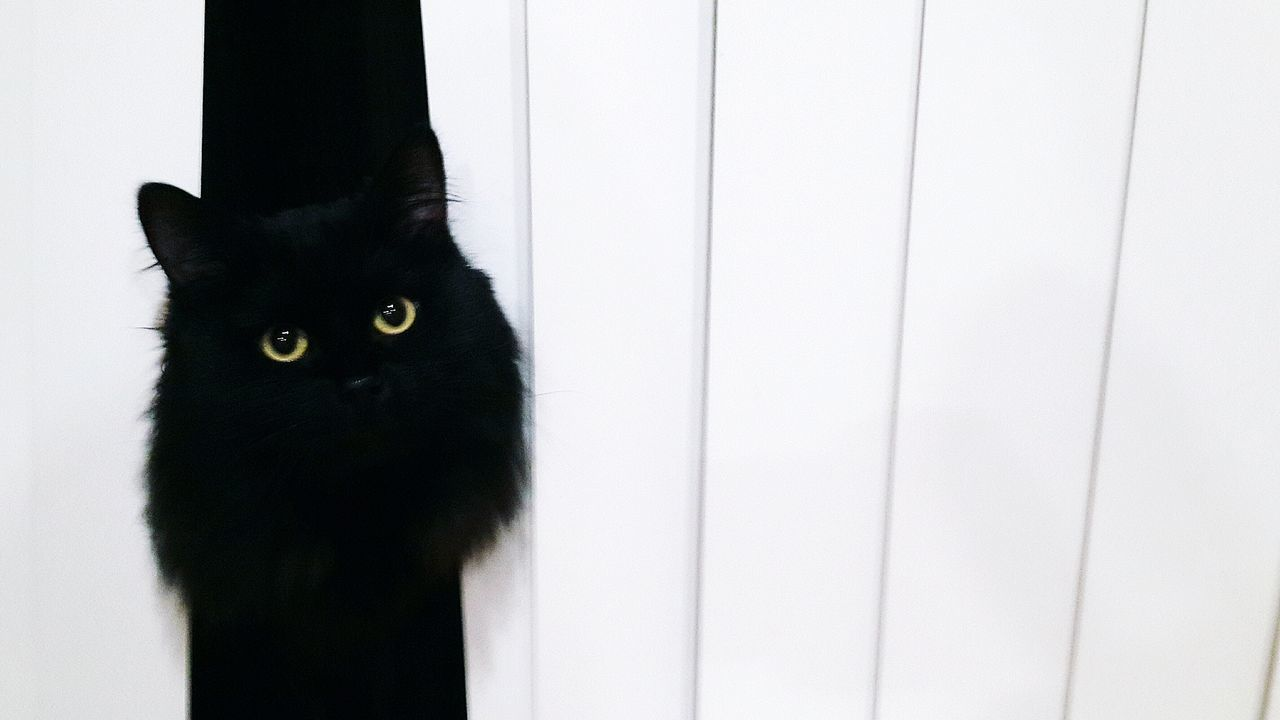 Pets Domestic Cat Looking At Camera Domestic Animals One Animal Animal Eye Animal Themes Portrait Watching No People Indoors  Yellow Eyes Cute Cats Cute Fur Contrast Looking At Camera Black And White Black