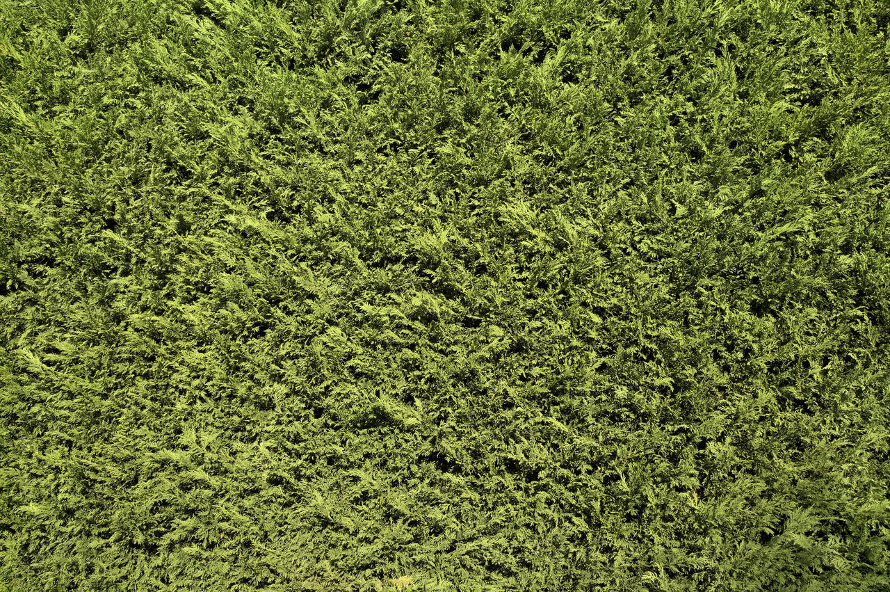 Backgrounds Day Fence Full Frame Garden Green Color Green Fence Green Wall Nature No People Outdoors Texture Textured  Thuja Vegetation Wall