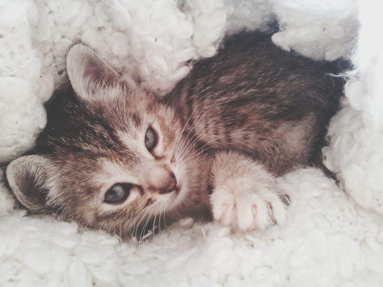 《paresse matinale》 Taking Photos Kattycat Tala