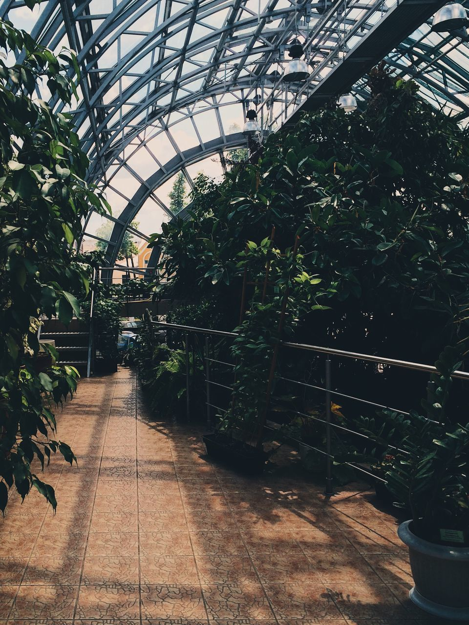 the way forward, plant, indoors, architecture, growth, greenhouse, built structure, day, tree, no people, nature, plant nursery