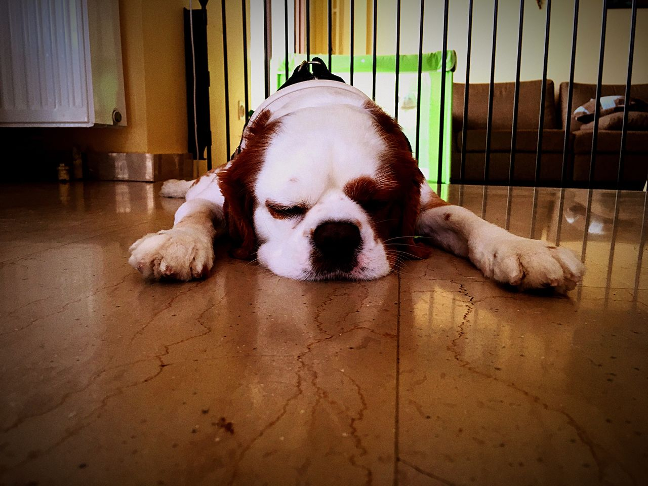Close-Up Of Puppy Lying On Floor