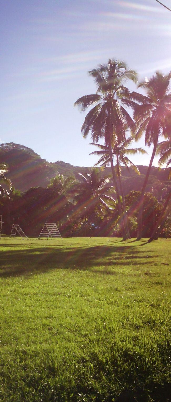 Coconut Trees Sunny Day Hello World Tahiti Green First Eyeem Photo 🌴🌴☀