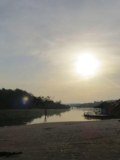 Amazon Amazon Rainforest Amazon River Amazonas Amazonas-Brasil Branch Nature At Its Best Sun Sunset Tranquil Scene Travel The World